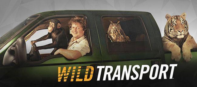Transporte salvajes de la estación 2 ha sido cancelado